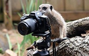 animals_and_cameras_funny_photographer-1